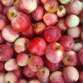 Урожайный год: куда пристроить яблоки, чтобы не пропали зря