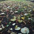 Lehevaip südasuvisel Rahumäe kalmistul
