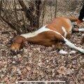 Jõulueelne massimõrv nõudis 20 hobuse elu: julmuri leidmise eest pandi välja vaevatasu