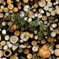 Вакра: сжиганию древесины на нарвских электростанциях будет положен конец