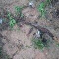 FOTO: Vihm uhtus maa seest välja 15 Teise maailmasõja aegset miini