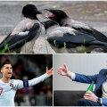 KOLUMN | Mart Pukk: linnukeste kätš on köitvam kui Ronaldo ja Coca-Cola kaotatud miljardid