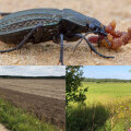 Putukad ja rohumaaribad. Kuidas saada rohkem saaki?