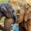Väljasuremine ohustab kõige enam suurekasvulisi ja aeglase eluviisiga liike