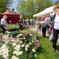 Kevadpealinnas tuleb sündmusterohke nädalalõpp