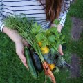 Peotäis oma aia köögivilju teeb alati meele hellaks.