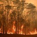 Uus-Lõuna-Walesis on leegid möllanud ligi viie miljoni hektari suurusel alal. See on võrreldav Hollandi-suuruse territooriumiga, kirjutas news.com.au.
