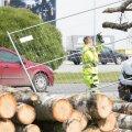 Puu mahavõtmine