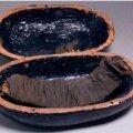 Mumifitseeritud veiseribi. Foto: PNAS