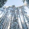 """""""Metsainventeerimisandmete osa ei sisalda mitte mingil kujul omaniku andmeid. Seega ei ole võimalik neid ka lekitada,"""" kinnitab Keskkonnaagentuuri metsaosakonna juhtivspetsialist Enn Pärt."""
