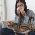 Kassi tahaks, aga allergia kimbutab? 10 nippi, kuidas kassiallergiaga toime tulla