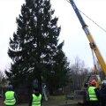 VIDEO ja FOTOD | Tartus pandi püsti jõulupuu