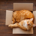 FOTOD   Miks kassidele meeldib pappkasti peitu pugeda?