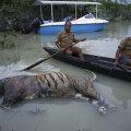 Kaziranga looduspargis Indias uppunud tiiger