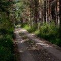 Kas sina oskad metsas käituda?