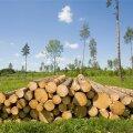 Okaspuupuidu hinnalangus on samal ajal alla 4% ja haavapuidul pisut üle 3%.