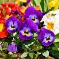Календарь садовода: чем заняться на участке в июне