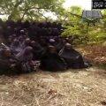 VIDEO ja FOTOD: Boko Haram avaldas video röövitud Nigeeria koolitüdrukutest