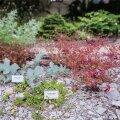 Tartu Botaanikaaia 215. sünnipäev - Eesti looduslikud taimed
