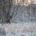 Tsükloni idaservas Baltimail on aeg-ajalt sadusid nii vihma, lörtsi kui üksikuis kohtades ka lumena.