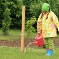 Ärge unustage äsja istutatud viljapuud kasta.