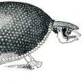 Selle väljasurnud sõiduautosuuruse eluka nimi on Glyptodon.