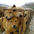 Miks piinatakse loomi?