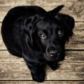 Lihtsalt üks koer (Foto: Pixabay / Free-Photos)