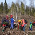 Talgu korras käib metsaistutamine kiiresti. See pilt on tehtud kevadel Põhja-Eesti Metsaühistu metsapäeval.