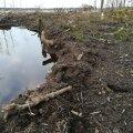 Pehme ja märg pinnas ei lase puitu metsast välja tuua.