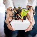 Лаванда в спальне и хлорофитум на кухне: какие растения поставить в разных комнатах, чтобы привлечь в дом счастье
