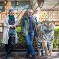 Loomaaiadisainer Julia Hanuliakova ja Tallinna loomaaia direktor Tiit Maran seisavad amuuri tiigri endise aediku ees. Tiigri tulevane kodu on aga märksa suurem ja rohkemate võimalustega.