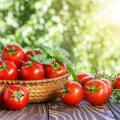 Neid aegumatuid tarkuseid tomatite edukaks kasvatamiseks pead sa teadma!