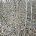 Kui põllumaa on metsa kasvanud, siis loetaksegi see metsaks.