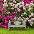 Kui kasvukoht on rododendroneile sobiv, rõõmustavad nad igal aastal uhkete õitega.