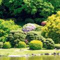Niwaki-stiilis puud Tokyos.