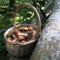 Maalehe seenemäng | Pane oma teadmised proovile, kas eristad söödavaid seeni mürgistest