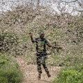 Somaallasi laastab tirtslaste invasioon