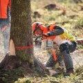 Euroopa noorte meistrivõistlused metsanduses
