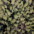 Рийгикогу обсудит влияние изменений климата на лес