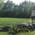 Nagu näha, tunnevad farmerid end alligaatorite lähedal üsna kindlalt.
