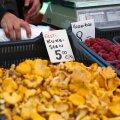 ФОТО: Рынки завалены грибами, но специалисты советуют собирать их в лесу