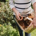Kohvipaks võib olla aednikule kasulik materjal, aga sellel on ka omad ohud.
