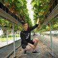 Joosepi talu agronoom ja müügijuht Ranet Roositalu katsetab maasikakasvatuses uute meetodite ja võtetega.