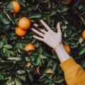 Удар в спину: полезный фрукт оказался канцерогенным