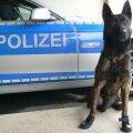Saksamaa neljajalgsed politseinikud saavad uued kingad