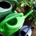 Pange vett taimede juurtele nii lähedale kui võimalik ja püüdke lehestikku mitte kasta.