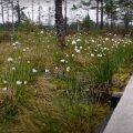 Блогеры показали самое посещаемое болото Эстонии — Виру. Зачем туда ехать и что интересного находится в его окрестностях?