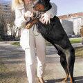 Koerad saavad kaela omaniku nimega kiibi