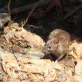 Madagaskarit raputab katkupuhang, 40 hukkunut
